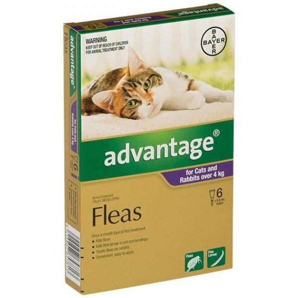 Advantage Large Cats >4kg 6-Pack