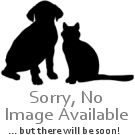 Royal Canin Veterinary Diet Dental Small Dog 2kg
